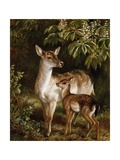 A Doe with Her Fawn Giclee Print by Samuel John Carter