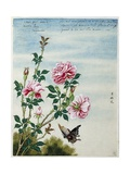 Early 19th-Century Chinese Watercolor of Pink Roses Giclee Print