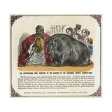 The Hippopotamus Now Exhibiting in the Gardens of the Zoological Society Print Giclee Print
