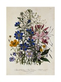 Linum Usitatissimum Botanical Illustration Giclee Print