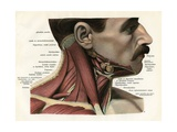 Lateral View of the Muscles and Glands of the Human Neck Giclee Print