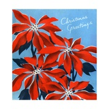 Vintage Illustration of Christmas Poinsettias Giclee Print