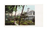 The Royal Poinciana Postcard Giclee Print