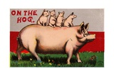 On the Hog Postcard Giclee Print
