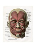 Frontal View of the Muscles of the Human Face Giclee Print