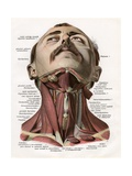 Frontal View of the Muscles and Glands of the Human Neck Giclee Print
