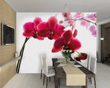 Orchid Wallpaper Mural Fototapeten