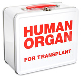 Human Organ Lunch Box Lunch Box