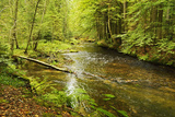 Grosser Regen (River), Near Bayerisch Eisenstein, Bavarian Forest, Bavaria, Germany, Europe Photographic Print by Jochen Schlenker