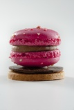 Raspberry Macaroons on Chocolate and Sable (France) Photographic Print by Christophe Madamour