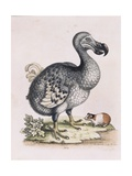 The Dodo Giclee Print