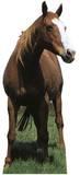 Mustang - Horse Silhouettes découpées en carton