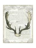 Regal Antlers on Newsprint II Giclee-tryk i høj kvalitet af Sue Schlabach