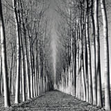 Vanishing Point Giclee Print by Hakan Strand