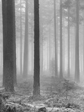 Towards The Light B&W Giclee Print by Andreas Stridsberg
