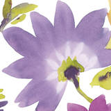 Violet Flower II Prints by Sandra Jacobs