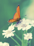 Dainty Giclee Print by Andreas Stridsberg