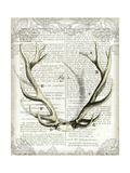 Regal Antlers on Newsprint I Premium Giclee Print by Sue Schlabach