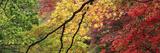 Maple Glade IX Reproduction procédé giclée par Bill Philip
