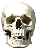 Skull Face Mask Mask