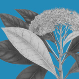 Botaniska I Impressão giclée por Maria Mendez