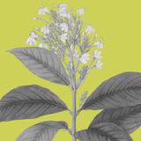 Botaniska V Impressão giclée por Maria Mendez