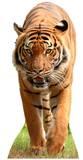 Tiger Pappfigurer