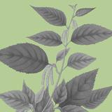 Botaniska IV Impressão giclée por Maria Mendez