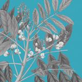 Botaniska II Impressão giclée por Maria Mendez