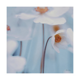 Spring Beauty I Blue Premium Giclee Print by Alicia Bock