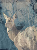 Deerhood IV Prints by Ken Hurd