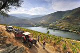 Grapes Harvest Along the Douro River, Near Covelinhas. Alto Douro, Portugal Photographic Print by Mauricio Abreu