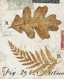 Nature's Leaves Poster by Angela Staehling