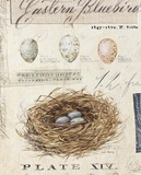 Nature's Nest Prints by Angela Staehling