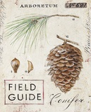 Nature's Pinecone Posters by Angela Staehling