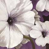 Petunia Array 1 Posters by Jurgen Gottschlag