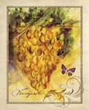 Valley Vines 1 Posters by Patricia Haberler