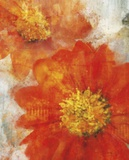 Tithonia Bloom 1 Prints by Ken Roko