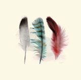 Three Feather Study 1 Prints by Evangeline Taylor