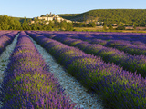 France, Provence, Banon, Lavender to Foreground Photographic Print by Shaun Egan
