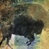 Bison 1 Prints by  Sokol-Hohne