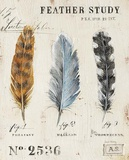 Nature's Feathers Prints by Angela Staehling