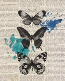 Newsprint Butterflies Posters by Morgan Yamada