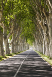 A Tree-Lined Road, Languedoc-Roussillon, France Photographic Print by Nadia Isakova