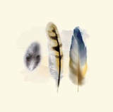 Three Feather Study 2 Posters by Evangeline Taylor