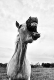 Grinning Horse, Camargue, France Photographic Print by Nadia Isakova