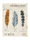 Nature's Feathers Premium Giclee Print by Angela Staehling