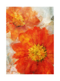 Tithonia Bloom 1 Posters by Ken Roko