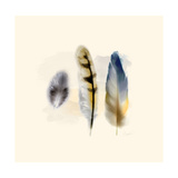 Three Feather Study 2 Prints by Evangeline Taylor