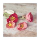 Country Poppies Giclée-Druck von Mandy Lynne